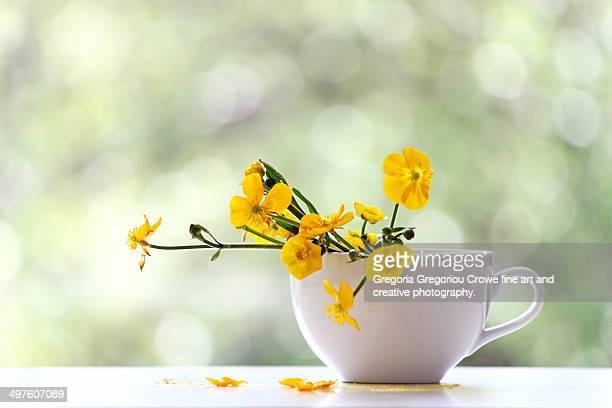 buttercup flowers in a cup - gregoria gregoriou crowe fine art and creative photography stockfoto's en -beelden