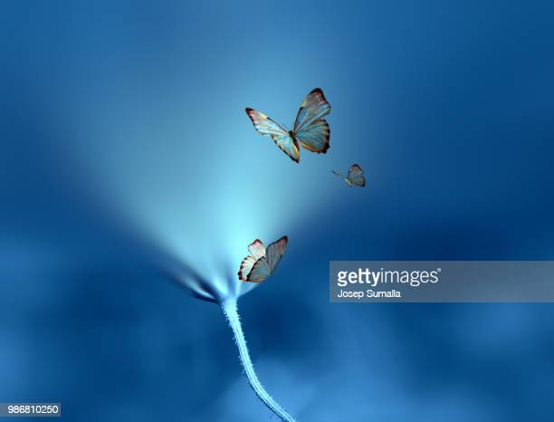 butterflies and an illuminating flower. - images ストックフォトと画像