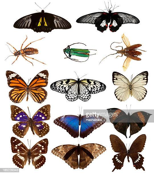 butterflies and beetles. - lithograph stock pictures, royalty-free photos & images