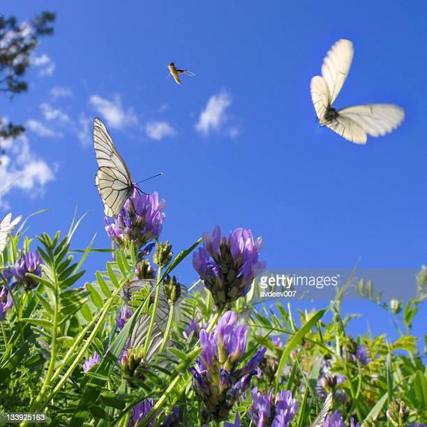 Butterflies and grasshoppers