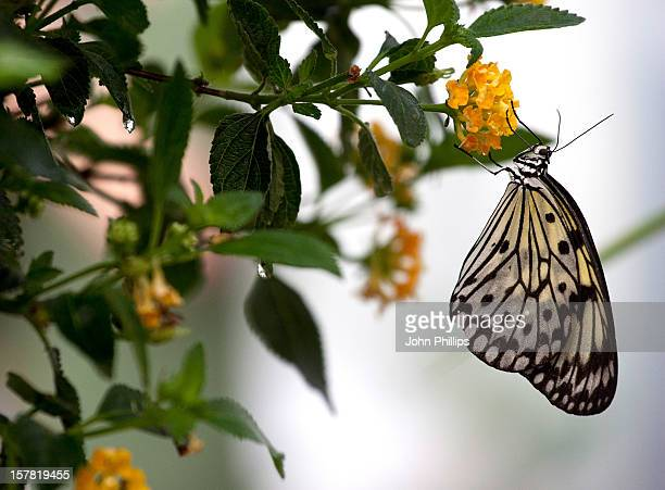 Butterflies At The Natural History Museum In London As 600 Hundred Live Butterflies Arrive For The Upcoming Sensational Butterflies Exhibition