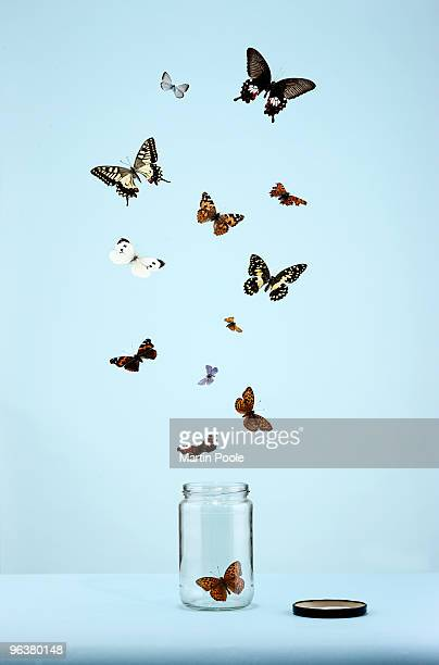 butterflies escaping from jar - schmetterling stock-fotos und bilder