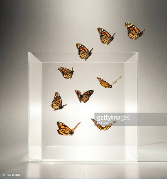 butterflies flying out of a clear box - free stock pictures, royalty-free photos & images