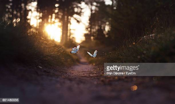 Butterflies Flying Over Trail During Sunset