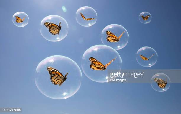butterflies in there own bubbles - animal behavior stock pictures, royalty-free photos & images
