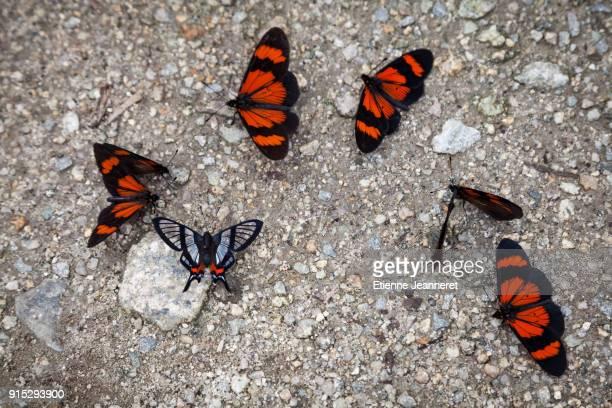Butterflies, Machu Picchu, Peru
