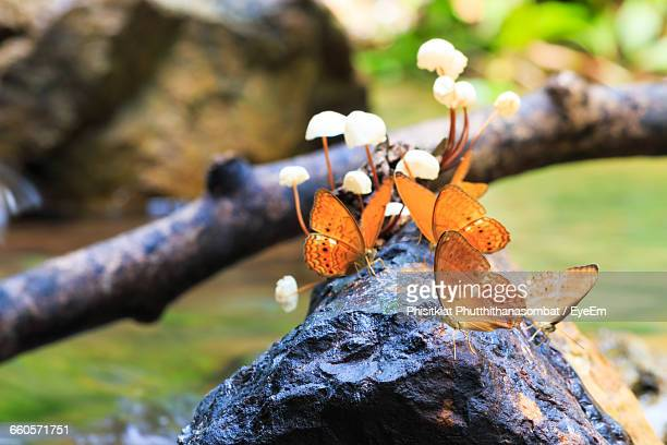 Butterflies On Rock At Forest