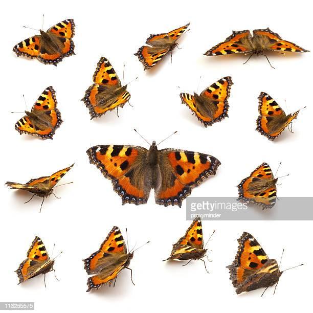butterflies on white - vlinder stockfoto's en -beelden