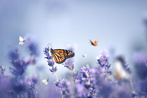 Butterflies 1201252148