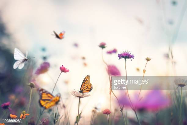 butterflies - flower head stock pictures, royalty-free photos & images