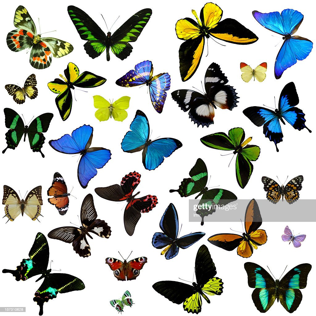 Butterflies : Stock Photo