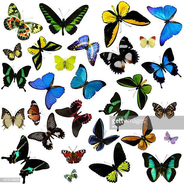 farfalle - farfalla a coda di rondine foto e immagini stock