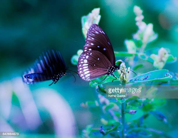 butterflies - neha gupta stock pictures, royalty-free photos & images