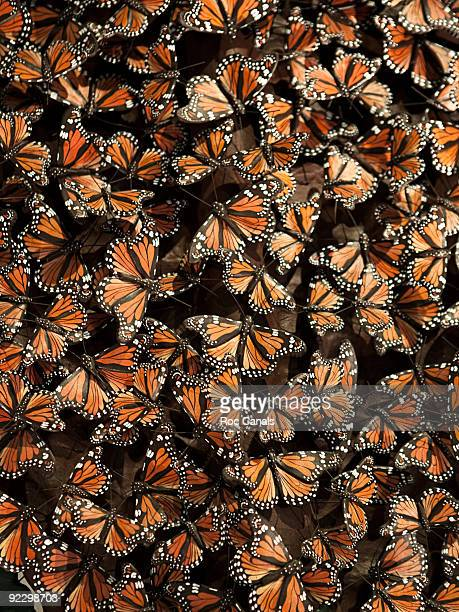 butterflies - large group of animals stock pictures, royalty-free photos & images