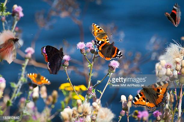 Butterflies sitting on flower