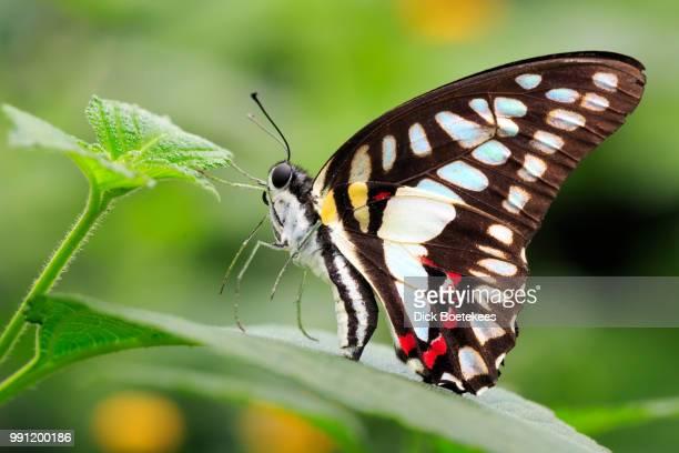 Butterfly 11