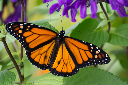 Butterfly 2019-54 1156363005
