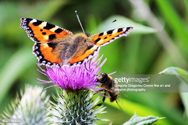 butterfly and bee - gregoria gregoriou crowe fine art and creative photography. stock photos and pictures