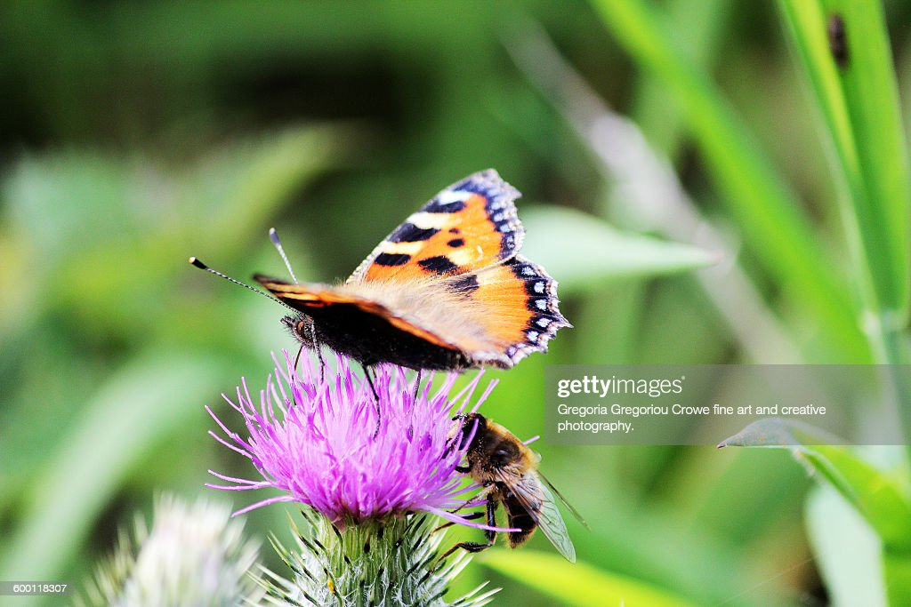 Butterfly And Bee : Stock Photo