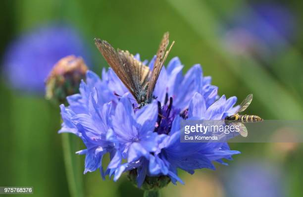 Butterfly And Hoverfly
