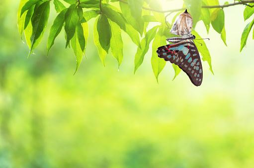 Butterfly change Chrysalis 1141601826
