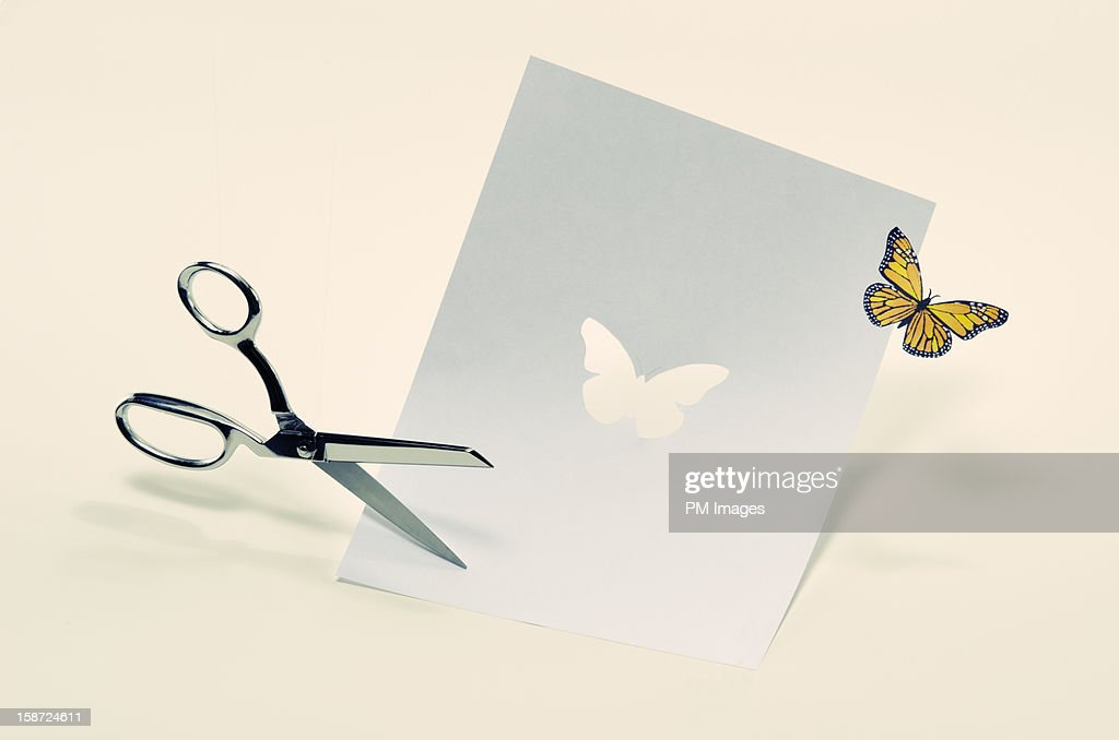 Butterfly cut from paper : Stock Photo