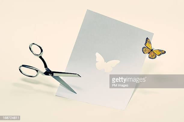 Butterfly cut from paper