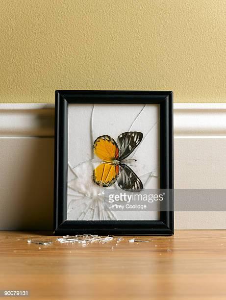 Butterfly Display Broken on floor