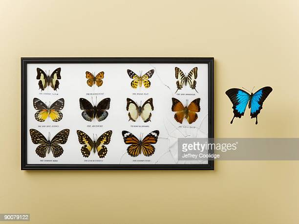 Butterfly Escaping Display Case