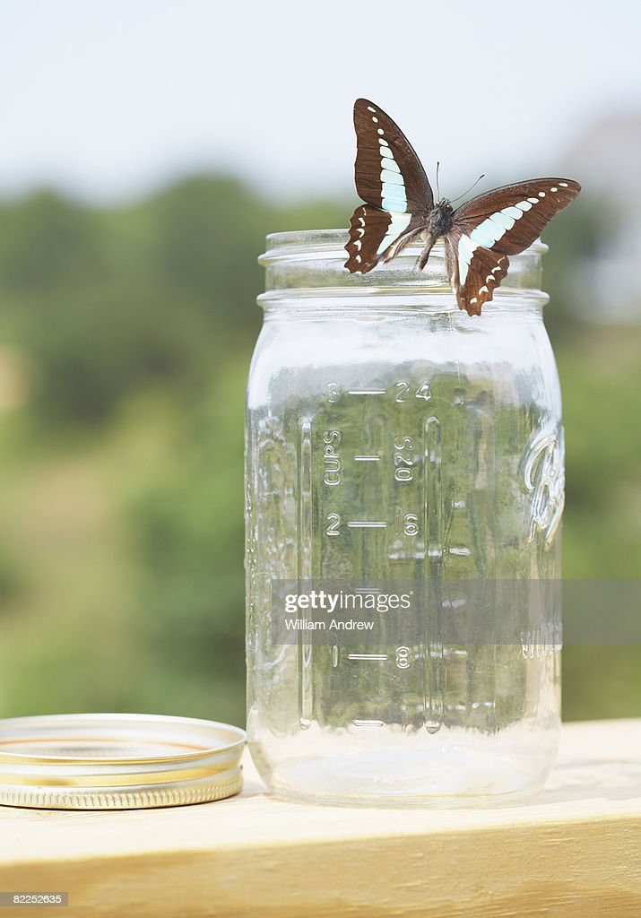 Butterfly escaping from jar : Stock Photo