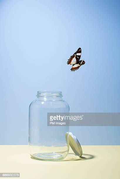 Butterfly escaping jar