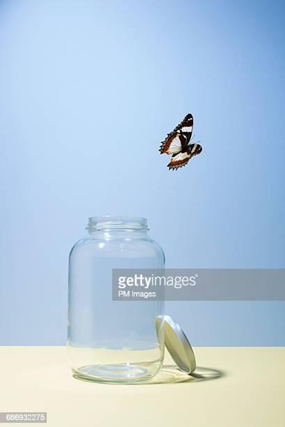 butterfly escaping jar - er even tussenuit stockfoto's en -beelden