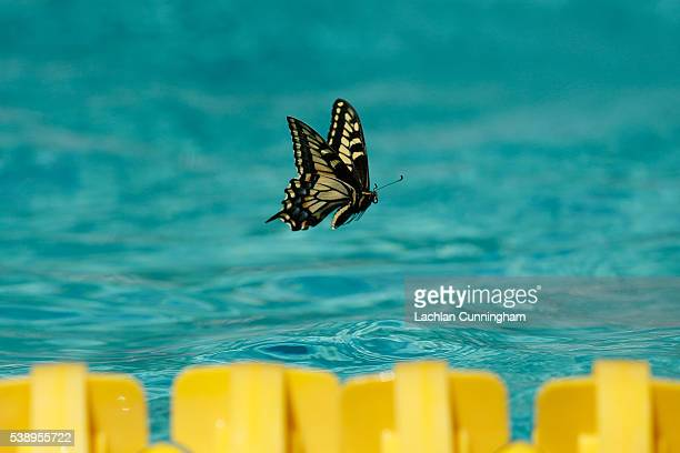 A butterfly flies above the pool during day one of the 2016 Arena Pro Swim Series at Santa Clara at George F Haines International Swim Center on June...