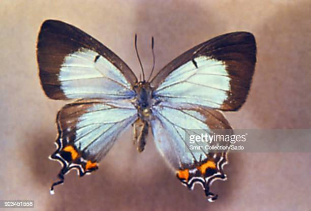 Butterfly from the Order of Lepidoptera found in a migrant labor camp 1972 Image courtesy Centers for Disease Control