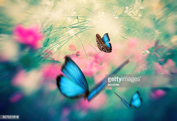 butterfly garden - idyllic stock pictures, royalty-free photos & images