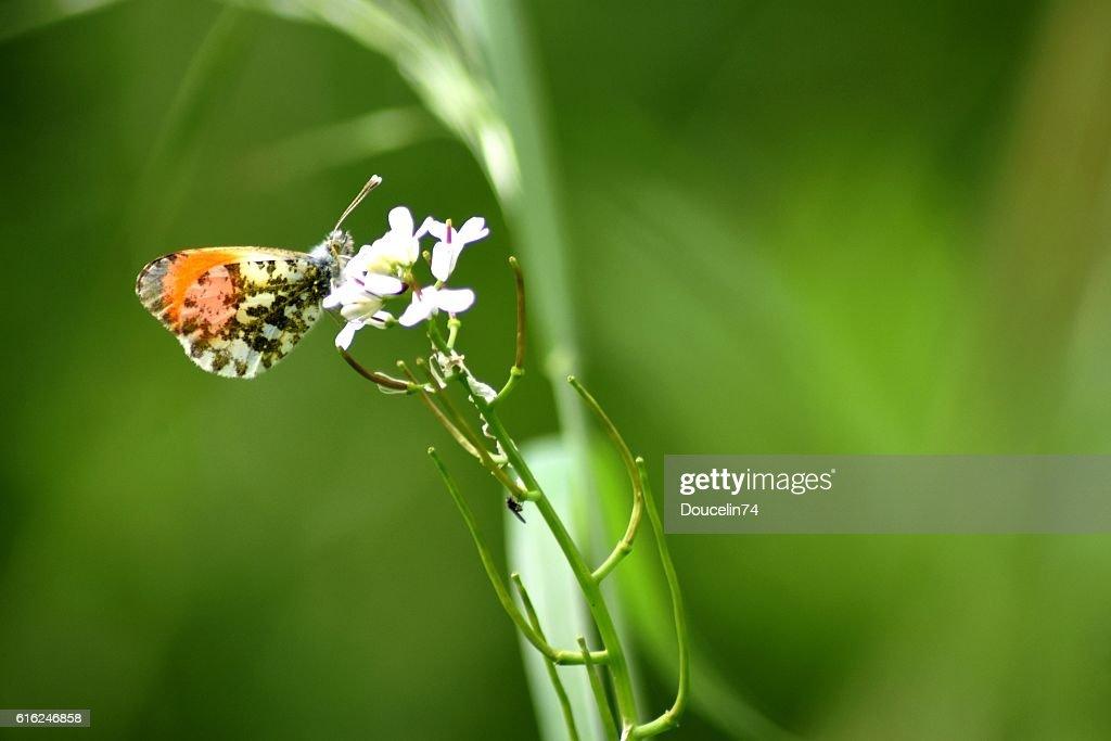 Mariposa en un campo : Foto de stock