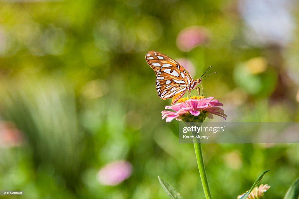 Butterfly In Garden : Stock Photo