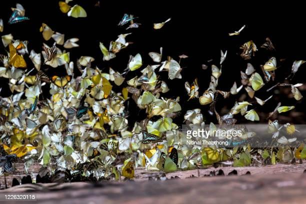 butterfly in nature. - ontheemden stockfoto's en -beelden