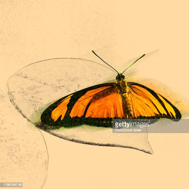 butterfly in the butterfly house - butterfly pencil drawings stock pictures, royalty-free photos & images