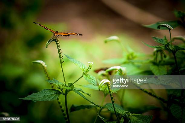 Butterfly in the rain forest