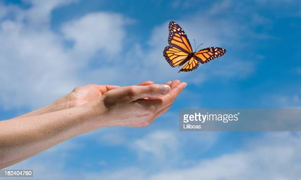 butterfly in the sky - releasing stock pictures, royalty-free photos & images
