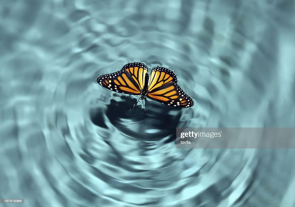 Butterfly in Water : Stock Photo