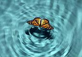 Butterfly in Water