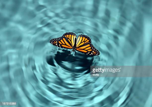 butterfly in water - rippled stock pictures, royalty-free photos & images