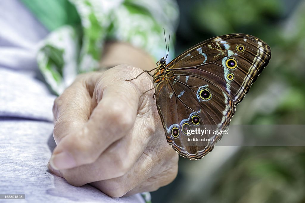 Butterfly landed on senior arthritic hand. : Stock Photo
