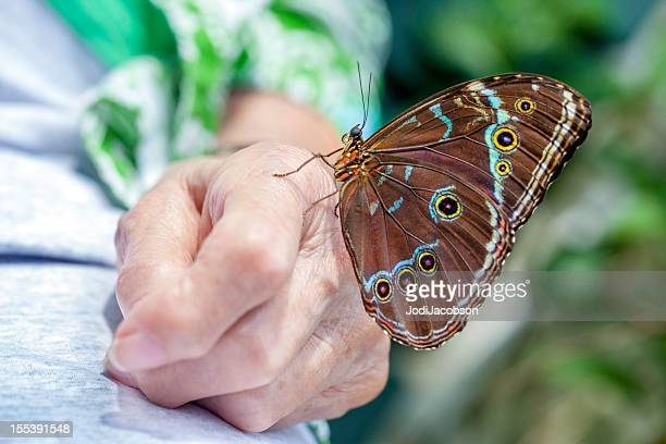 butterfly landed on senior arthritic hand. - rheumatoid arthritis stock pictures, royalty-free photos & images