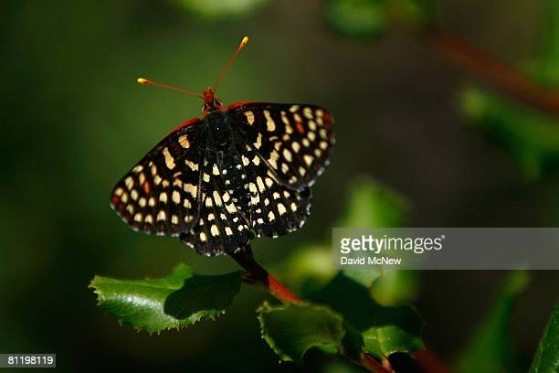 A butterfly lands in Santa Ynez Canyon in Topanga State Park on May 21 2008 in Los Angeles California California's entire state park system the...