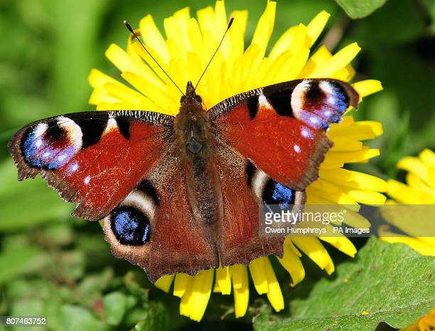 A butterfly lands on a flower during the warm weather in Derbyshire