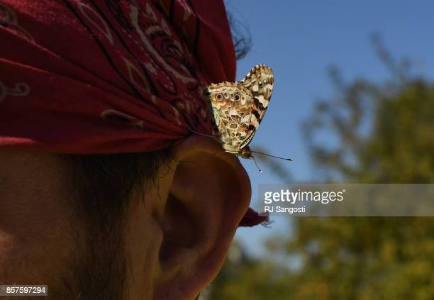 A butterfly lands on Jason Below as he works on the installation of Ai Weiweis internationally renowned Circle of Animals/Zodiac Heads at Civic...