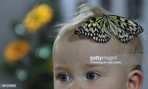A butterfly lands on the head of a baby during a butterflies exhibition in Bishkek on January 9 2015 AFP PHOTO / VYACHESLAV OSELEDKO